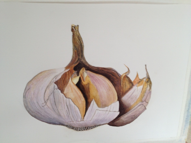 "Cherin Tuck, one of ""Two Buds"" and a lifelong garlic grower, is also a talented botanical artist who draws detailed illustrations like the ""Broken Garlic Bud."""